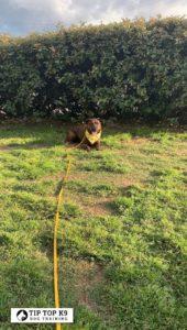 Tulsa Puppy Training 13