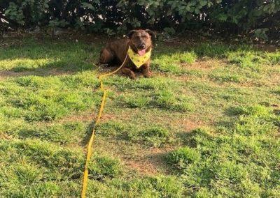 Top Mckinney Dog Training