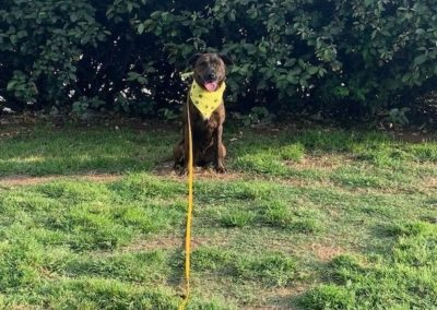 Mckinney Dog Training