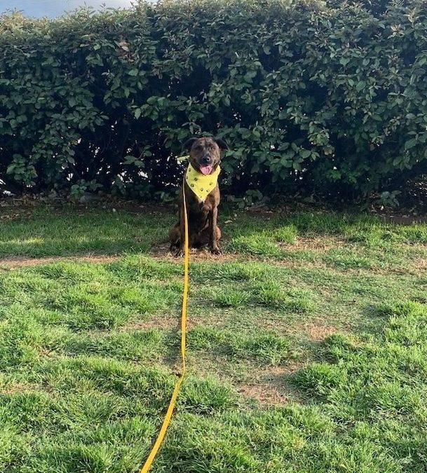 McKinney Dog Training | Dog Doesn't Like Other Dogs? Call Us!