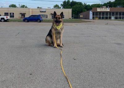 Find Dog Training Keller Texas
