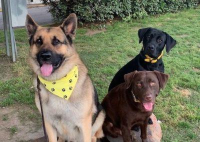 Dog Training Colleyville Texas