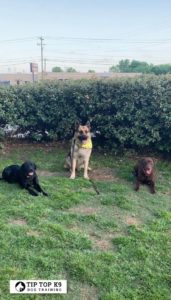 Dog Training Keller Texas