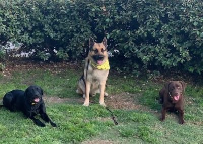 Dog Training Keller Texas
