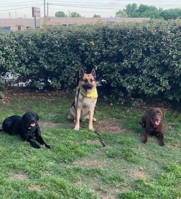 Dog Training Keller Texas | Our Wonderful Staff Cares About Dogs!