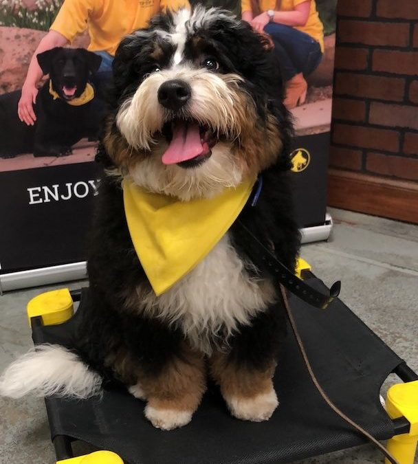 Dog Training Southlake Texas | Smile When You See Your Doggie!
