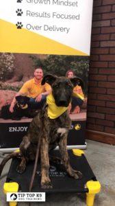 Tulsa Puppy Training 2