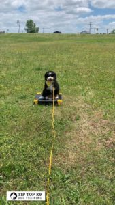 Tulsa Puppy Training 23