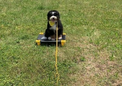 Dog Training in Colleyville Texas