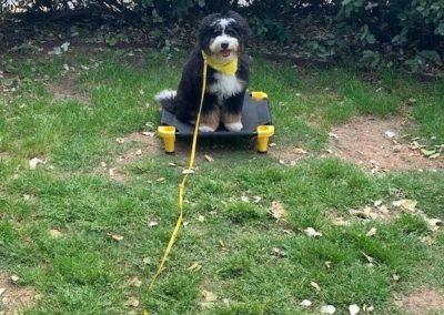 Dog Training In Metro Detroit