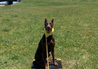 Dog Training Utah