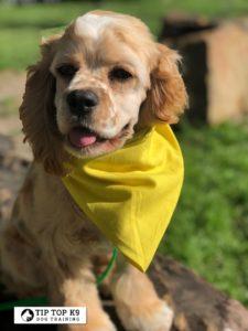 Dog Training in South Lake Texas