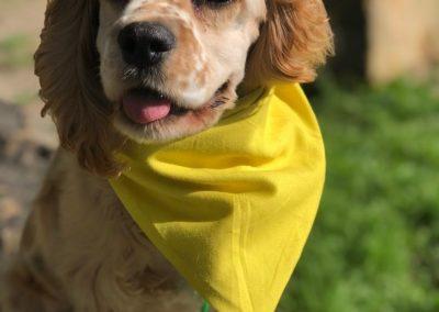 Dog Training Novi