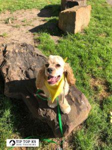 Find Dog Training in Colleyville