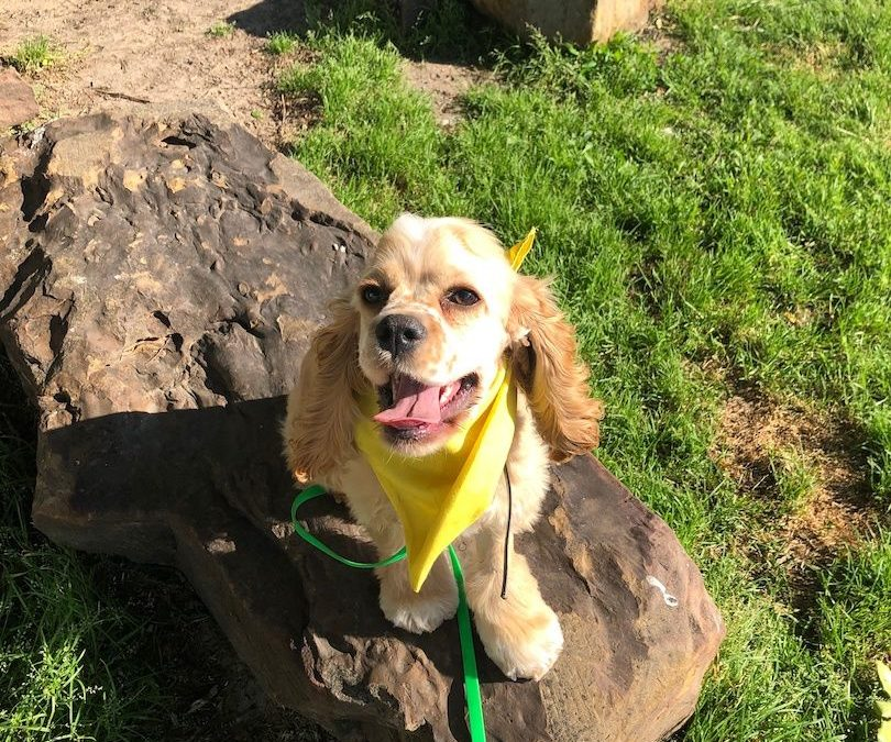 Find Dog Training in Colleyville | You Will Wish You Had Decided On Us!
