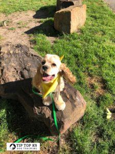 Tulsa Puppy Training 29