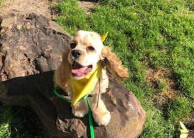 Keller Dog Training