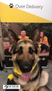 Tulsa Puppy Training