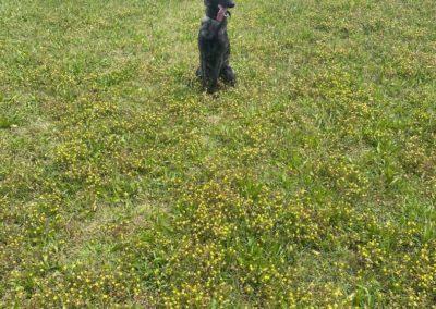 Dog Training Southlake