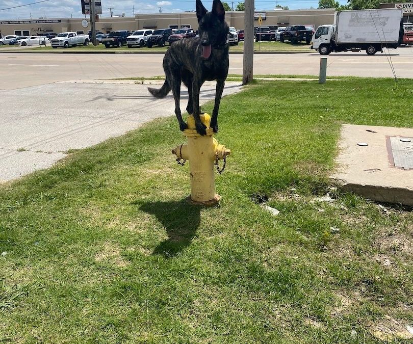 Top Dog Training West Jordan Utah |  We Have The Solution For Your Pet