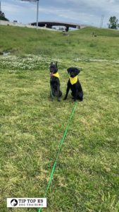 The Best Dog Training in Colleyville