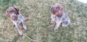 Boise Dog Training 20181117 171356