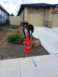Boise Dog Training 20190521 150444