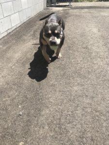 Boise Dog Training IMG 0270