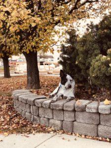 Boise Dog Training IMG 0534