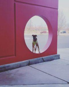 Boise Dog Training IMG 20190208 100336 219