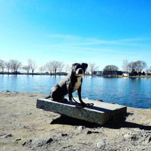 Boise Dog Training IMG 20190321 103345 073