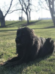 Boise Dog Training IMG 8259