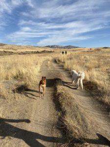 Boise Dog Training IMG6784345330397556867