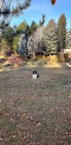 Boise Dog Training JR1