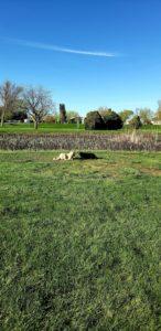 Boise Dog Training NM33
