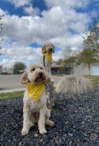 Boise Dog Training Image0 (6)