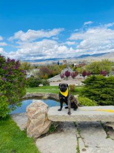 Boise Dog Training Image1 (4)