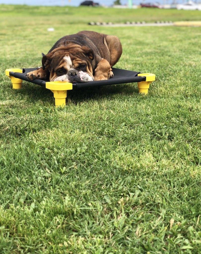 Bulldog Dog Training Tulsa | Tip Top K9