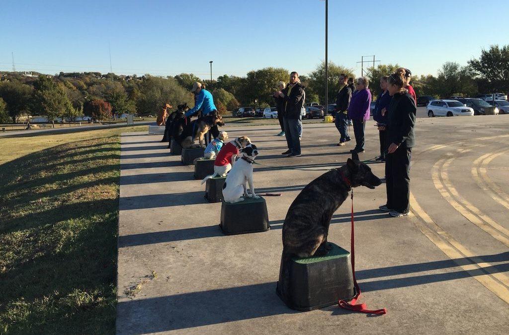 Dog Training Tulsa | He's Just A Little Ruff Around The Edges.