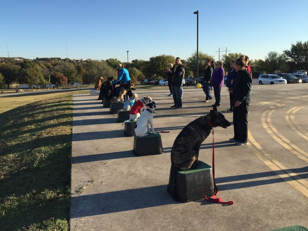 Dog Training Tulsa | Demonstration