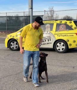 Dog Training Tulsa At A Park