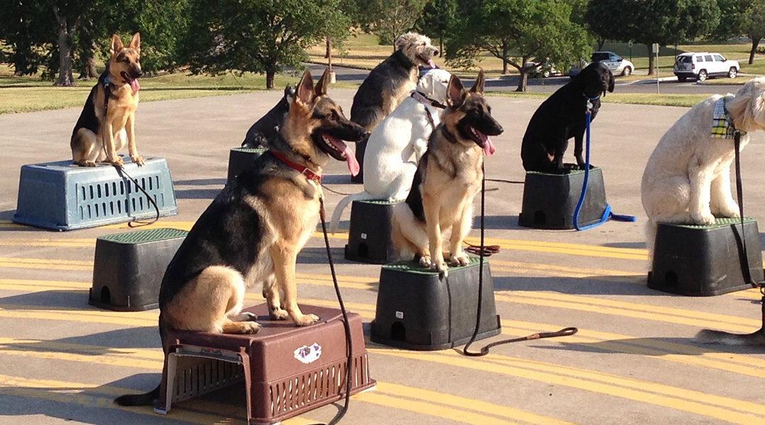 Meridian Idaho Dog Training | Super Superior Dog Training!