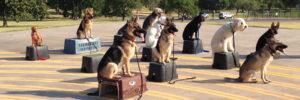 Meridian Idaho Dog Training