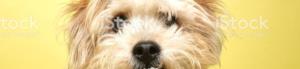 Find Dog Training Colleyville Texas