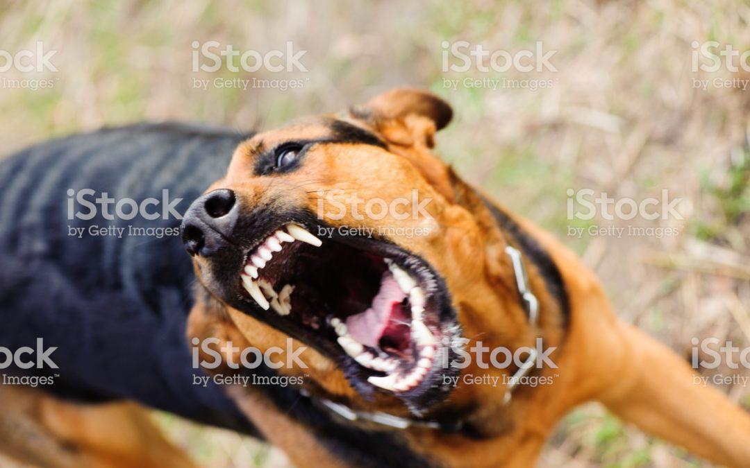 Dog Training Colleyville Texas | Get Better Dog Training