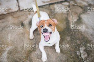Gilbert AZ Dog Training