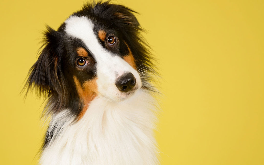 The Best Dog Training In Keller Texas | We Only Offer The Highest Quality Of Services