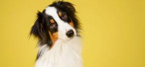The Best Dog Training In Keller Texas