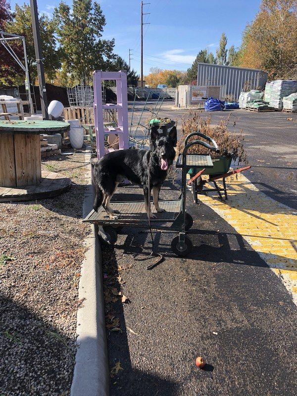 Meridian Dog Training Groot