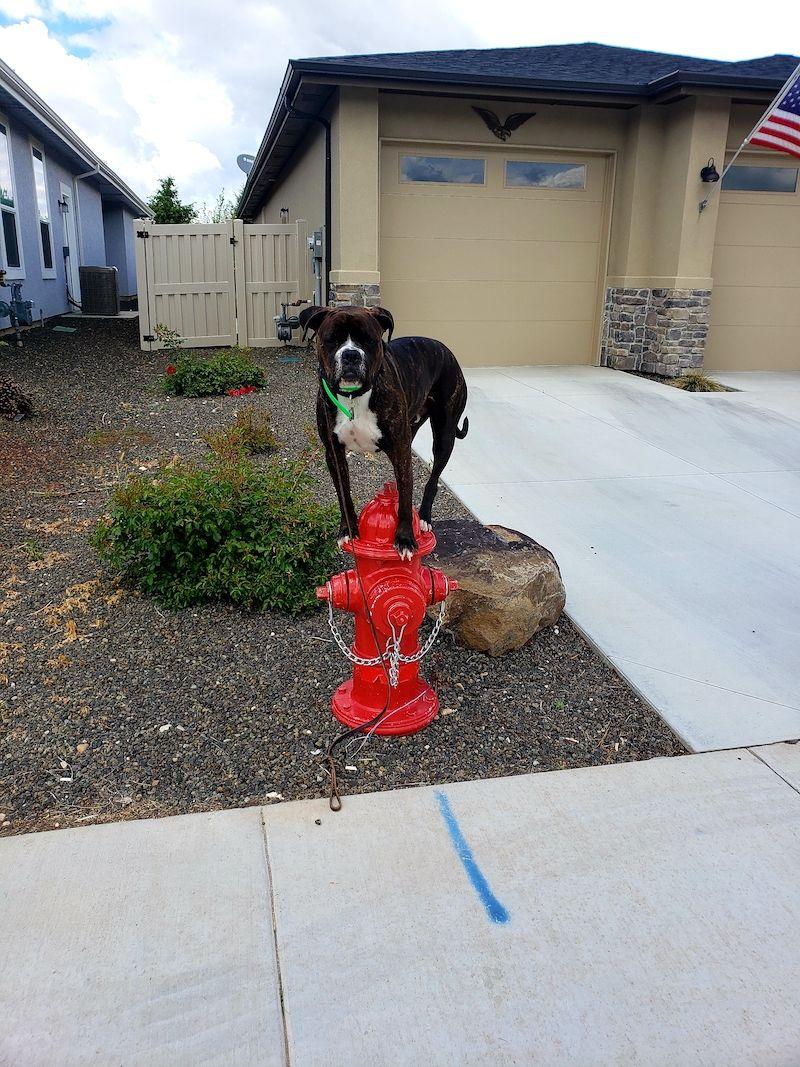 Meridian Dog Training | Dog 1